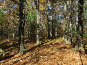 Truesdale Hill Rd, Lake George, NY 12845