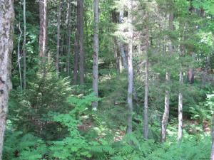 Valley Woods Rd, Bolton Landing, NY 12814-0000