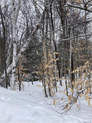 34 Chatiemac Trail, North Creek, NY 12583