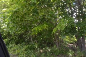 Newton St, Ticonderoga, NY 12883